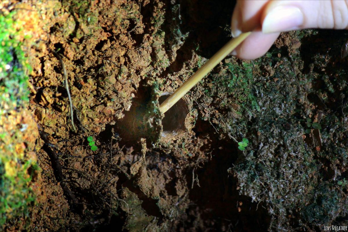 Getarnte Spinnenhöhle