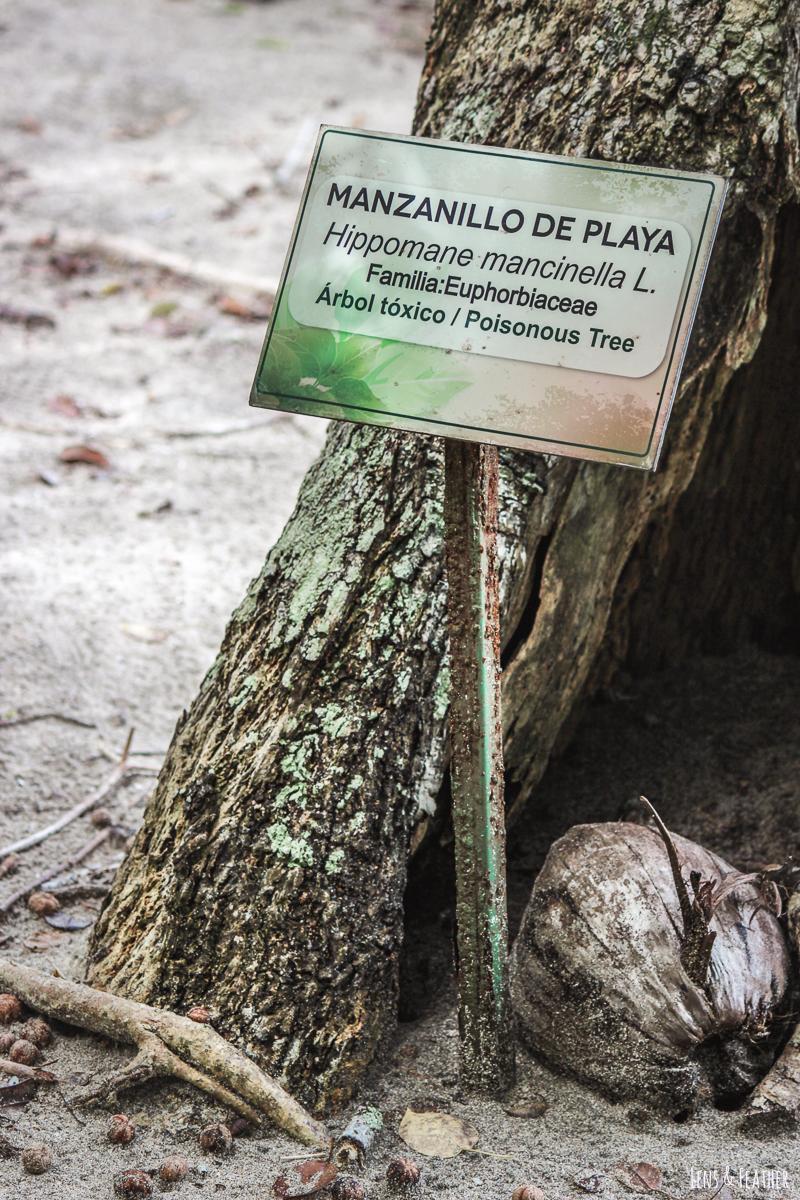 Warnung vor dem Manchinelbaum im Nationalpark Manuel Antonio