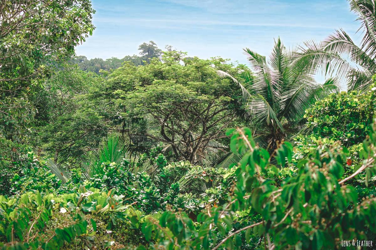 Aussicht auf den Regenwald im Nationalpark Manuel Antonio