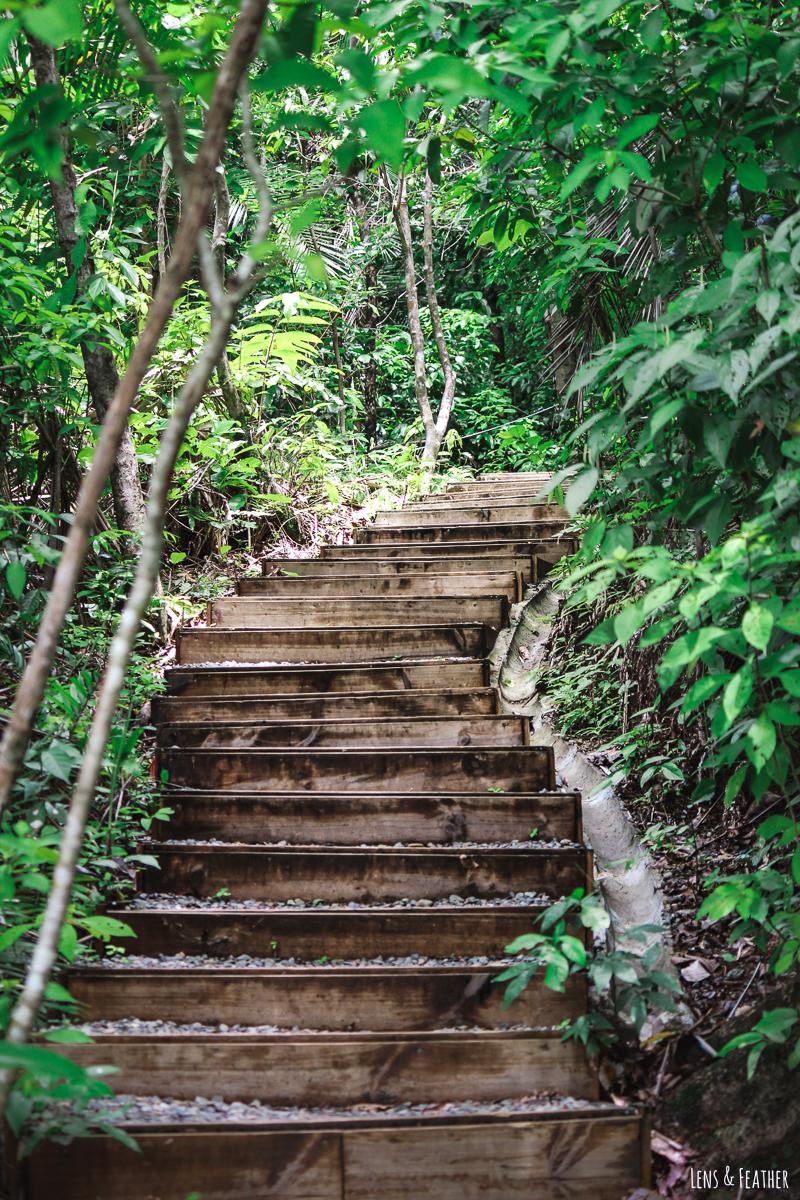 Wanderweg in Manuel Antonio Costa Rica