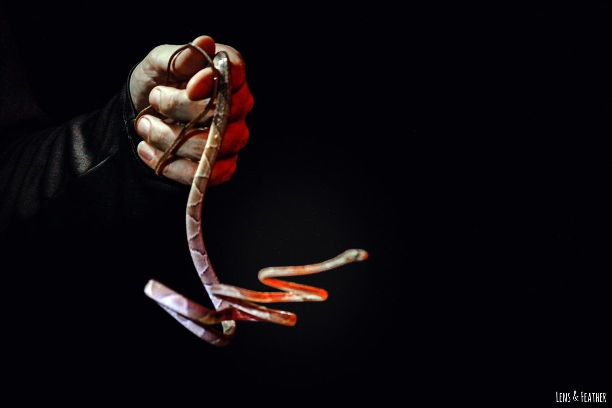 Nachttour Guide hält kleine Schlange in der Hand