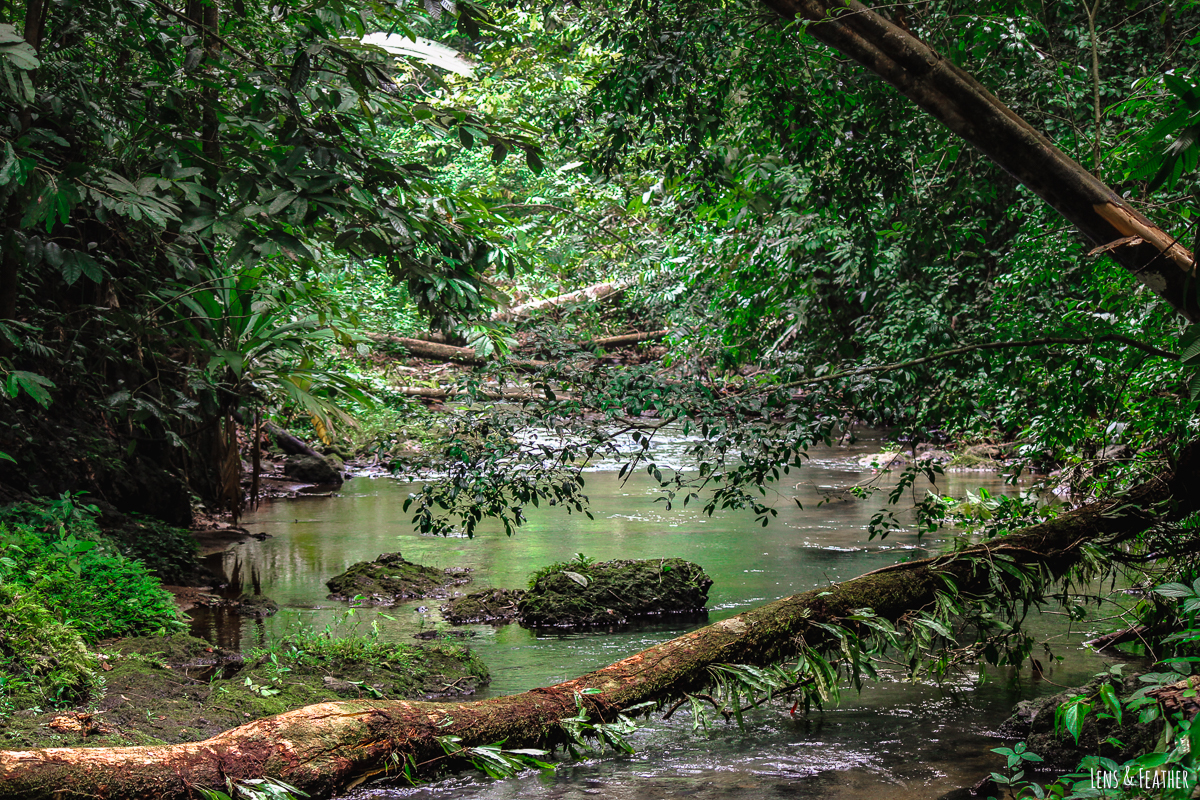 Flussüberquerung im Corcovado Nationalpark
