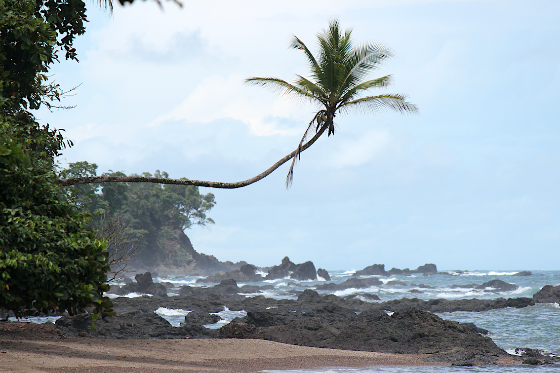 Schiefe Palme am Strand vom Corcovado