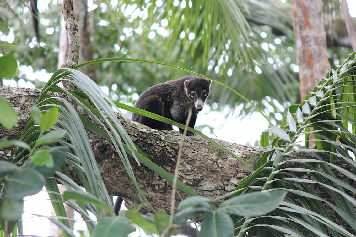 Costa Ricas Tierwelt - Fotoguide und Tipps