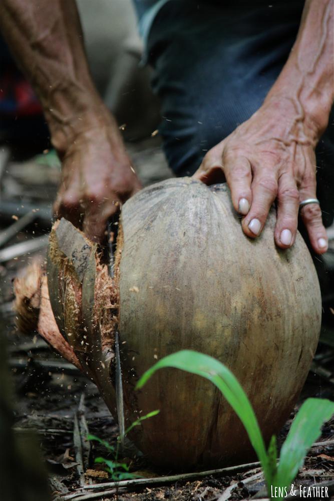 oeffnen-einer-kokosnuss