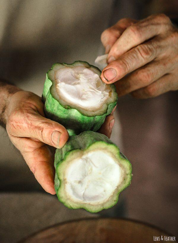 Kakaofrucht mit weißem Fruchtfleisch