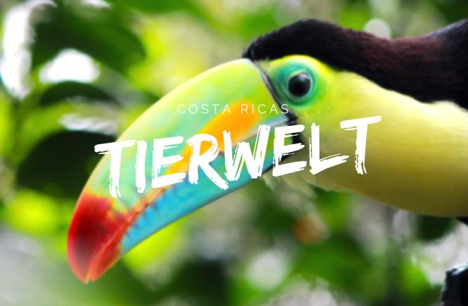 Costa Ricas Tierwelt