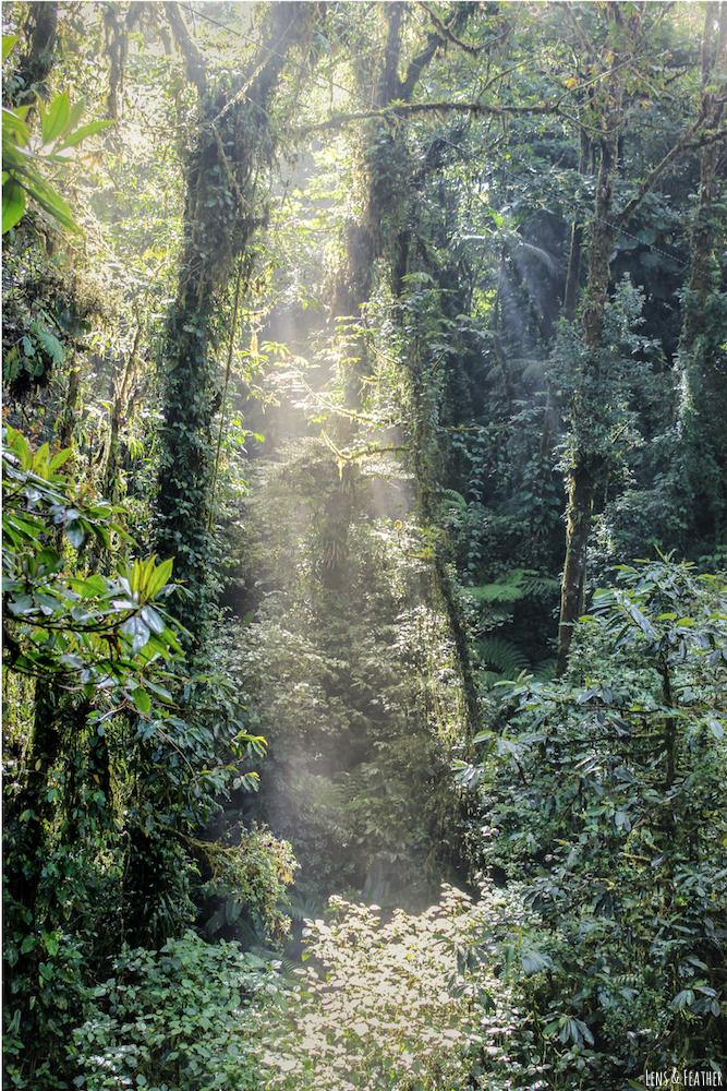 Lichteinfall im Regenwald in Panama