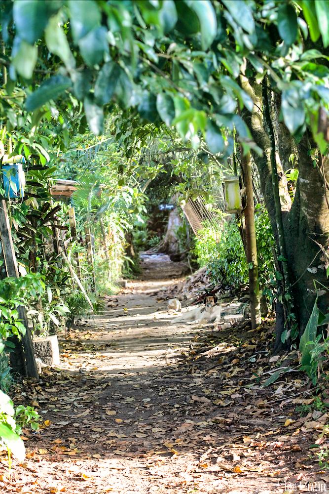 Kleine Straße in Tortuguero Costa Rica