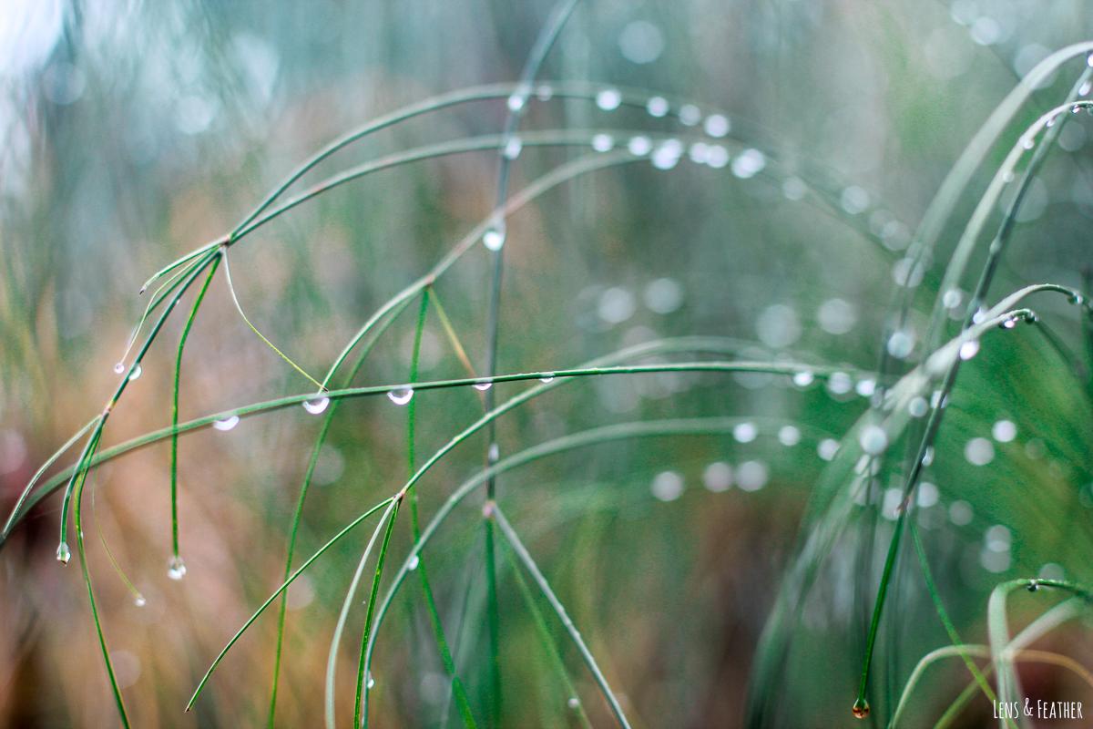 Regentropfen im Nebelwald