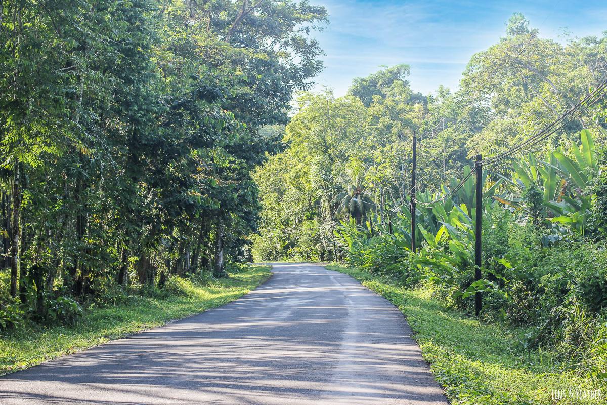 Straße nach Manzanillo Costa Rica