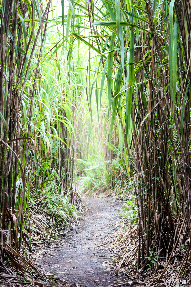 Letzter Abschnitt des Bosque Trails