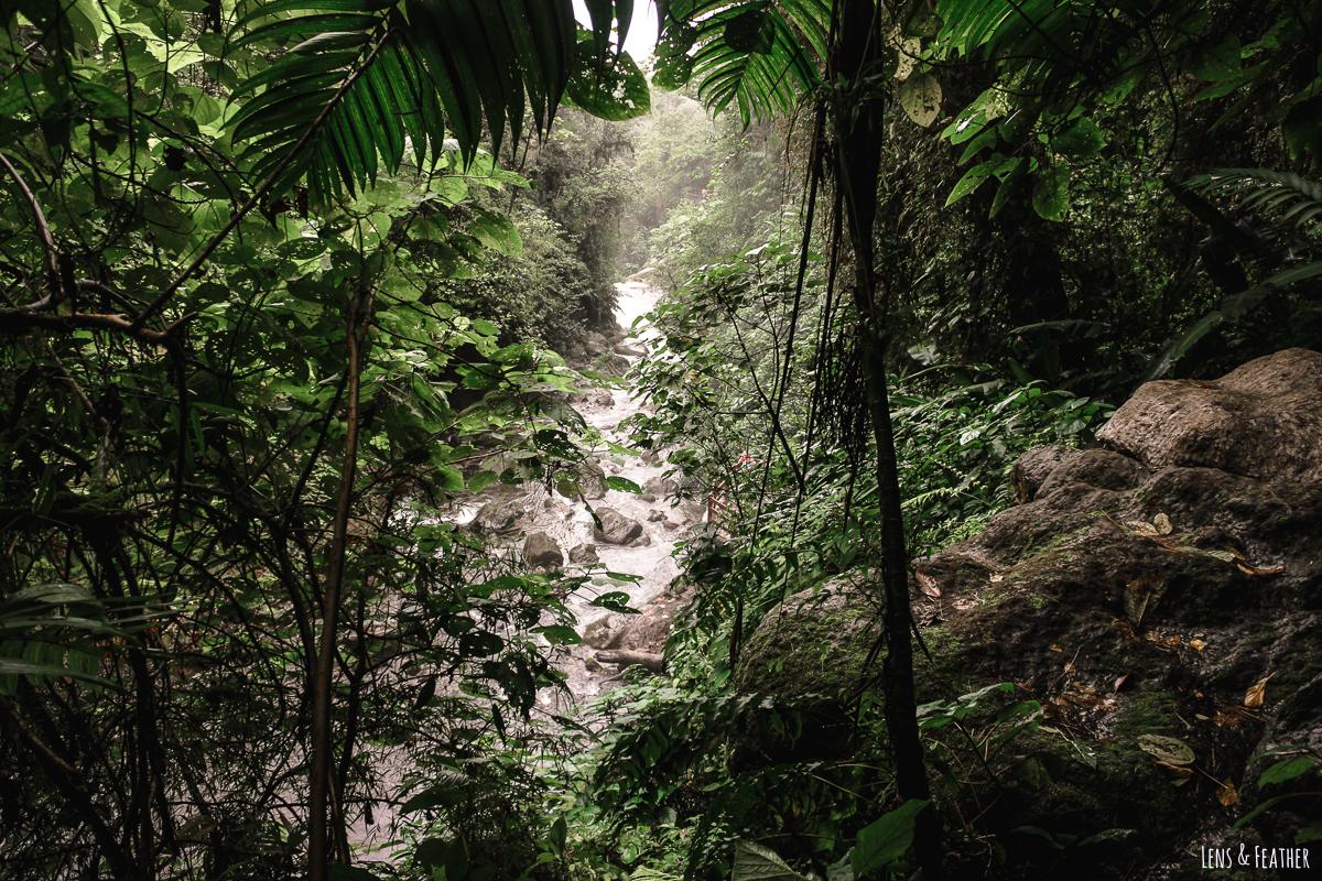 Regenwald in den Wasserfallgärten von La Paz in Costa Rica