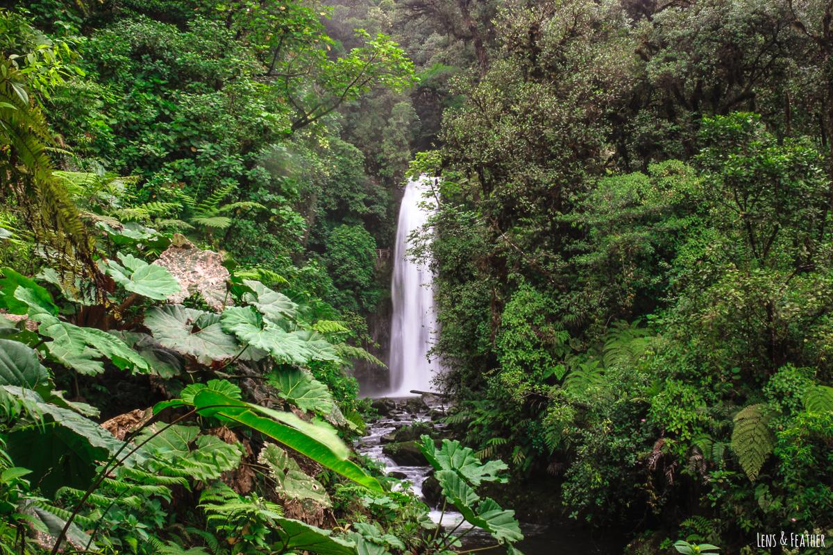 La Paz Wasserfallgärten in Costa Rica Erfahrungsbericht