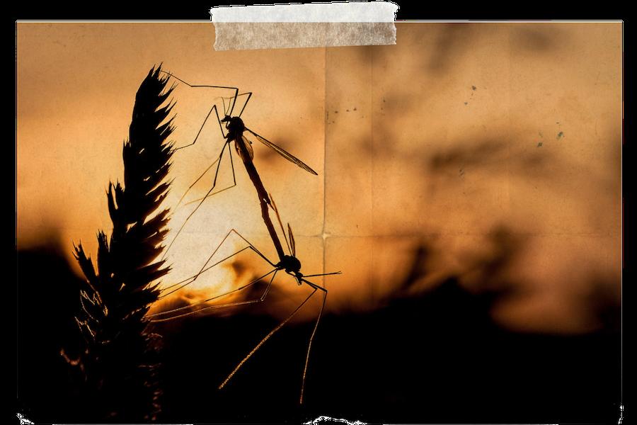 Tropische Krankheiten in Costa Rica, Malaria und Impfungen